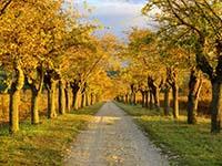 Лиственные деревья в озеленении