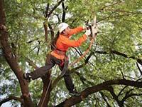 Уход за лиственными деревьями