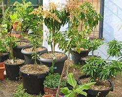 Ошибки при посадке плодовых деревьев