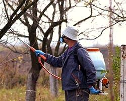 Защита от болезней и вредителей плодовых деревьев