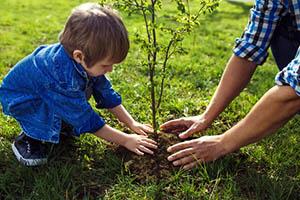 Посадка плодовых деревьев весной: 3 правила и 5 мифов.